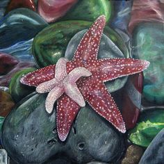 Starfish Colored Pencil Drawing on 18x18  by CatherineBradlyArts, $350.00