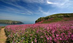 Pembrokeshire National Park in 2 days