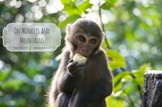 On Monkeys and Mountains DearOne Photography Taiwan Monkeys, Taiwan, Mountains, Blog, Photography, Travel, Animals, Rompers, Photograph