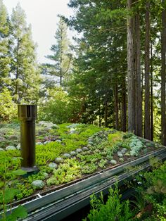 The Mill Valley Cabins by Feldman Architecture were added to their existing hillside home…green architecture