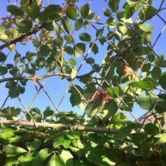 Galleries | Garden Requisites Garden Trellis Panels, Metal Trellis, Wall Trellis, Trellis Fence, Door Canopy Porch, Porch Awning, Front Porch, Door Canopy Designs, Rose Wall