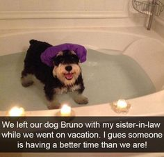 Funny Snapchats Dog Photo - 190 Pics – Funnyfoto | Funny Pictures - Videos - Gifs - Page 182 #funnydogvideos