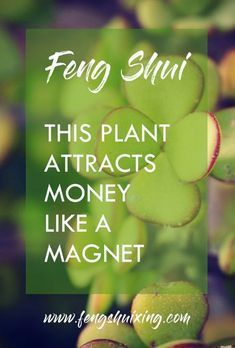 Feng Shui plant that attracts money like a magnetFind out more about the powerful Feng Shui plant that helps you gain the energy of wealth, prosperity and money. Read MoreHow To Use Feng Shui To Attract Money And Wealth Jardin Feng Shui, Casa Feng Shui, Feng Shui And Vastu, Feng Shui House, Feng Shui Home Office, Office Fung Shui, Home Feng Shui, Feng Shui Desk, Feng Shui 2019