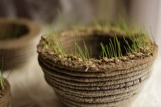 Impression 3D avec de la terre et des graines !