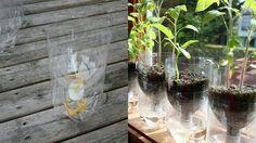 2l bottle planters
