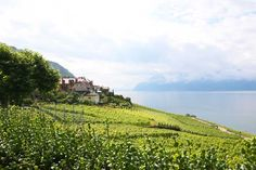 Reportaje #Suiza. Viñedos Lavaux.