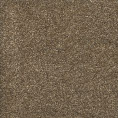 Trafficmaster Stryker Court Color Greystone Texture 12 Ft Carpet H2017 3793