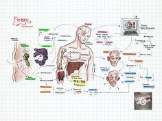 La Chuleta de Osler, cómo estudiar medicina   Blog EMP