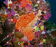 Amazing colors - Sea Fiji Photo Gallery by Larry Hastings