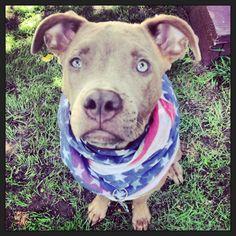 #pitbull #fourthofjuly