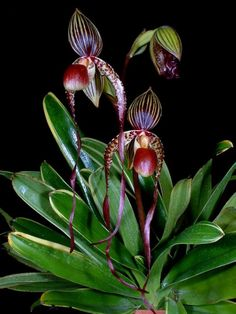 Garden Flowers - Annuals Or Perennials Orchids, Paphiopedilum Strange Flowers, Unusual Flowers, Rare Flowers, Types Of Flowers, Flowers Nature, Amazing Flowers, Beautiful Flowers, Orchid Plants, Exotic Plants