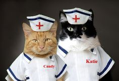 These cat nurses mean business!