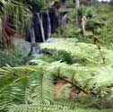 The Waterfall View Deck- San Diego Botanical Garden