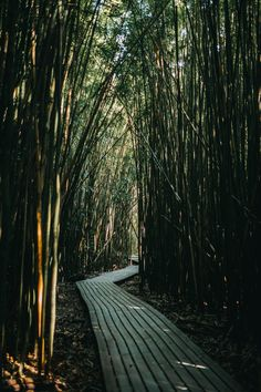 May your path lead to all the abundance a bamboo forest could sustain - in other words, we wish you limitless growth. 💚  #StayKynd Cityscape Photography, Travel Photography, Best Landscape Photographers, Sunshine Holidays, Maui Activities, Road To Hana, Adventure Of The Seas, Forest Road, Maui Vacation