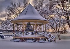 tree in gazebo #snow #christmas
