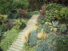 plantes succulentes et graminées dans le jardin en pente