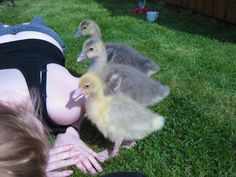 Our first three goslings
