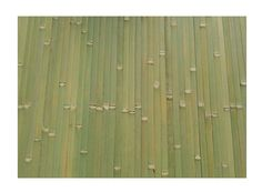 Tambour Panels Raw Green 4' H X 8' L. Bamboo tambour panels boast versatility because of their matted nature and can be used on ceilings, as wall coverings or to decorate surfaces. Cloth backings provide ease of application and their color variation provides a three dimensional look.