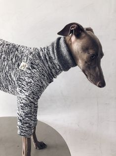 italian greyhound and whippet clothes / iggy clothes / Dog Sweater / ropa para galgo italiano y whippet/ GRAY JUMPSUIT Underwear, Italian Greyhound, Whippet, Spring, Jumpsuits, Warm, Etsy, This Or That Questions, Dogs