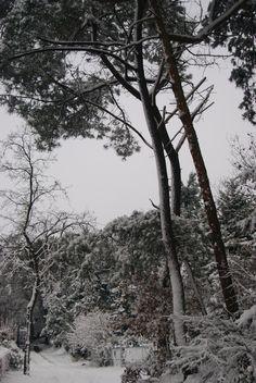 Snow last winter