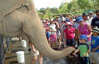 Australia Zoo mit dem Croc Express