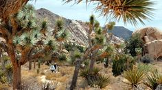 hikers on a trail seen through spiky Joshua trees...If you're ready to try real-life rock climbing…visit Joshua Tree National Park.