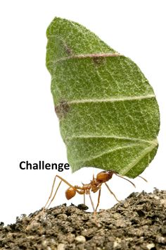 give yourself a challenge Coaching, Plant Leaves, Challenges, Motivation, Board, Plants, Image, Training, Flora