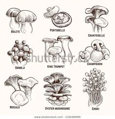 Find Sketch Mushrooms Autumn Edible Mushroom Healthy stock images in HD and millions of other royalty-free stock photos, illustrations and vectors in the Shutterstock collection. Thousands of new, high-quality pictures added every day. Mushroom Drawing, Mushroom Art, Edible Mushrooms, Stuffed Mushrooms, Art Sketches, Art Drawings, Psychedelic Art, Art Design, Comic