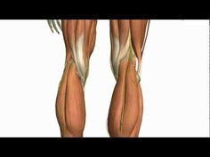 ▶ Muscles of the Leg - Part 2 - Anterior and Lateral Compartments - Anatomy Tutorial - YouTube