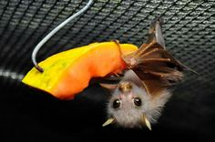 I'm starting to think I have an unhealthy obsession with bats.