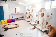 Humane Society of Sarasota County kitty room- Love the white/jute wrapped posts. Large Cat Tree, Tom Y Jerry, Cat Hotel, Animal Gato, Shelter Design, Pet Boarding, Pet Resort, Cat Towers, Gatos Cats