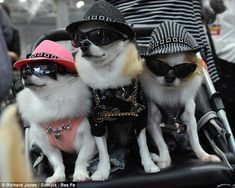 This is no CAT-walk: These pups keep it cool dressed in shades, hats and medallions in pet crazy japan's most ludicrously expensive clothes emporium