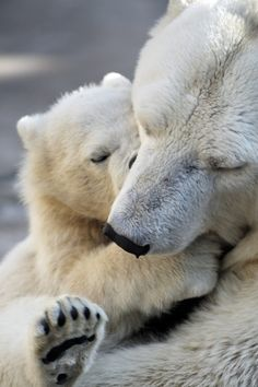 Polar bear and cub (give my heart to those who need it most. Those who suffer most. Those who have no voice.)