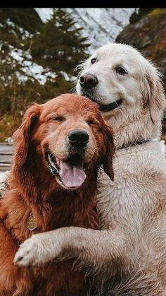 Animals And Pets, Baby Animals, Funny Animals, Cute Animals, Chien Golden Retriever, Cute Puppies And Kittens, Funny Animal Photos, Dog Rules, Cute Creatures