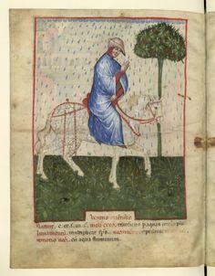 Nouvelle acquisition latine 1673, fol. 99v, Climat : vent d'est