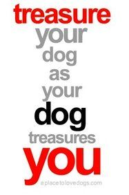 Treasure your dog as your dog treasures you