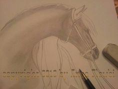WiP1.......Pferd / Horse