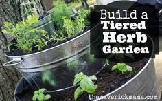 Learn how to build a tiered herb garden using three galvanized steel tub buckets with plants. Herbs include basil, oregano, parsley, thyme, mint and more.