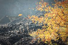 autumn tree in a quarry Autumn Trees, My Photos, Photography, Painting, Art, Fall Trees, Painting Art, Paintings, Kunst