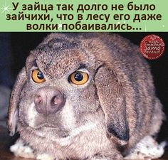 Funny Phrases, Animals, Laughing, Funny Taglines, Animales, Animaux, Animal, Animais, Madea Funny Quotes