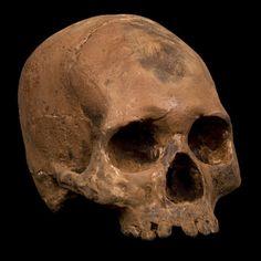 Chocolate Skull, $320 - better than diamonds!