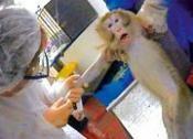 alternatives to .Needs confirmation Pour des alternatives aux vaccins obligatoires testés sur les animaux