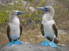 Island hopping in Galapagos sounds like a good option to me. I'm just not too fond of boats.