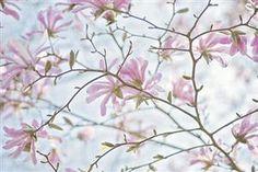prettylittleflower:  Vintage Spring (by Jacky Parker Floral...