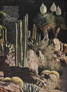 Boulders with cacti & succulents...perfect for around the farm!  (from Phoenix Home & Garden Magazine).