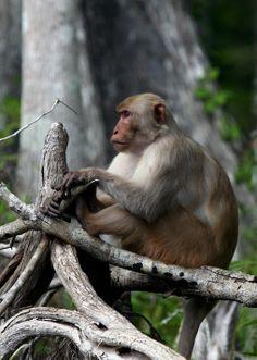 7 Most Bizarre Feral Animal Populations
