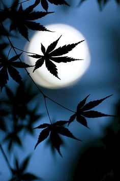 Moon (via Photo Awards Ciel Nocturne, Moon Shadow, Shoot The Moon, Photo Awards, Blue Moon, Stars And Moon, Moon And Stars Wallpaper, Night Skies, Night Sky Moon
