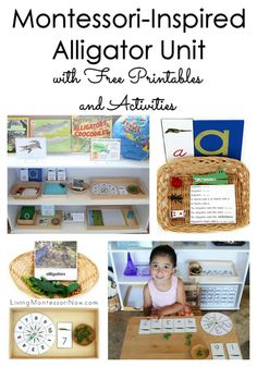 LOTS of free printables and Montessori-inspired activities for an alligator unit. High-interest theme plus greater than, less than alligator activities for preschool through grade 1!