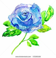 Blue Rose. Watercolor painting. - stock photo