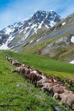 The path to Alpine pasture